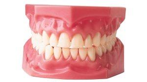125861-teeth